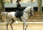 Rencontres Equestres4.jpg