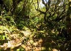 Hell Bourg - Cap Anglais - Gite du Piton Des Neiges-16.jpg