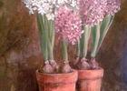 mireille payen fleurs.jpg