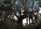 La Roche Ecrite depuis Mamode Camp-15.jpg