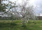 Audirac-jardin (2).jpg