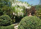 jardindecistus-buis-sit.jpg
