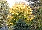 jardindecistus-arbres3-sit.jpg