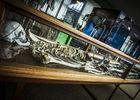 museumsciencesnaturelles-géant.jpg