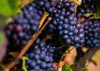 Art-In-The-Harvest-Darrin-Ballman-Commercial-Photography-8604_WEB_LOGO.jpg