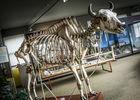 museumsciencesnaturelles-squelette.jpg