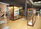 muséesciencesnaturelles-salled'expo-mons.jpg