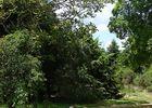 Arboretum1-sit.jpg
