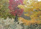 jardindecistus-arbres1-sit.jpg