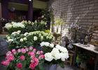 floribel-fleurs1-mons.jpg