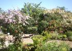 jardindecistus-été-sit.jpg