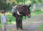 A Dos D'âne à Tour-en-Sologne