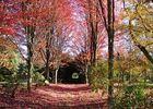 Arboretum6-sit.jpg