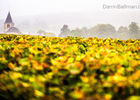 Art-In-The-Harvest-Darrin-Ballman-Commercial-Photography-9190_WEB_LOGO.JPG