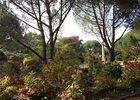 jardindecistus-arbres4-sit.jpg
