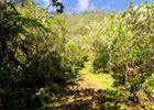 Hell Bourg - Cap Anglais - Gite du Piton Des Neiges-17.jpg