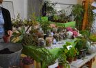 Jardin Roy < Haution < Thiérache < Aisne < Hauts de France