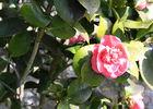 Fleurs < Rosier < Thiérache < Aisne < Picardie