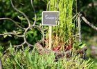 Jardin d'Hélène < Proisy < Thiérache < Aisne < Hauts-de-France