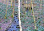 Sentier découverte de Blangy < Hirson < Thiérache < Aisne < Hauts de France