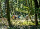 Randonnée en forêt de Retz