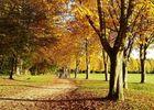 à l'automne © Ot Villers-Cotterêts