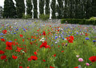 blerancourt_chateau_musee_franco_americain_marc_poirier