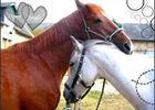 braine_centre_equestre_la_grange_chevaux