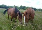 braine_centre_equestre_le_grange_chevaux