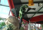chauny_oasis_decor_jungle_animal