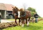 grandlup-et-fay_ferme_du_bois_chantrud_chevaux