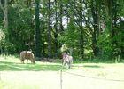 Chambres d'hôtes Métairie de la Béraudaie ânes et chevaux - Bohal - Morbihan - Bretagne