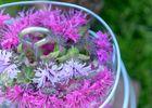 balades florales - Ploërmel - Morbihan - Bretagne