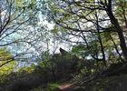 Forêt Iffendic chambre au loup domaine de Careil et boutavent ©office de tourisme Lac de Trémelin (3)