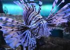 L'Aquarium de Vannes