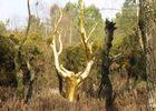 L'arbre d'or, Destination Brocéliande, Bretagne