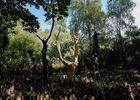 L'arbre d'or, forêt de Brocéliande, Destination Brocéliande