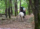 Cheval Brocéliande - Tréhorenteuc - Brocéliande