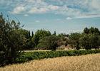Chateau Pech Celeyran-Salles d'Aude_1