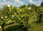 PCU-Jardins-de-Haute-Terre--6-
