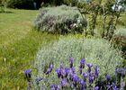 PCU-Jardins-de-Haute-Terre--11-