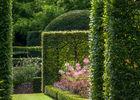 charmille jardinieres pheretaxus 7