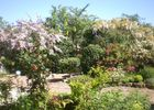jardin-cistus-20