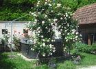 ronsard en fleurs