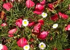 mauleon-st-aubin-de-baubigne-gite-les-guyonnieres-fleurs.jpg_12
