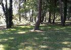 cirieres-chambres-dhotes-domaine-de-la-lorien-arbres.jpg_9