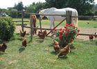 La ferme au colombier