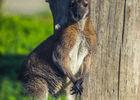 wallabys4