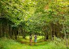 Bois de Saint Ronan - Plozevet - Pays Bigouden-2