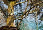 Bonobo Parc 20160312_165024